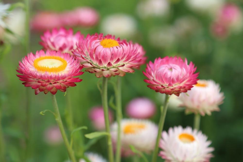 flowers-398941_1280